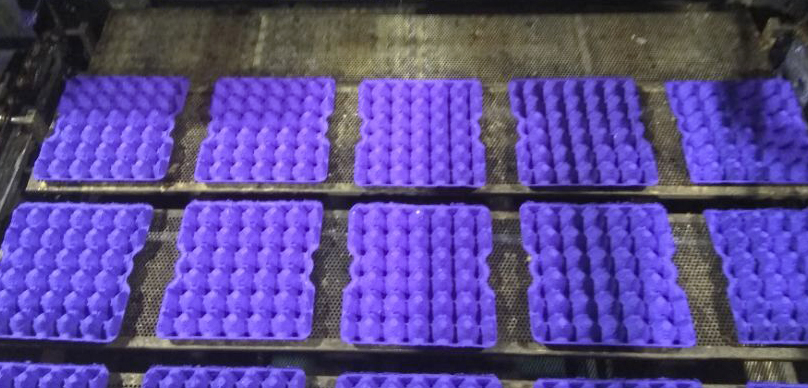 Egg Tray Production Line in Jordan